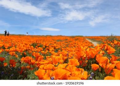 poppy seed reserve in California