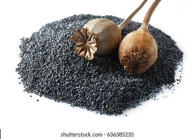 Poppy seeds and poppy heads isolated on a white background