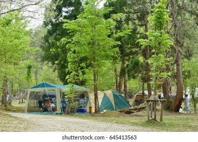 popular car camping with family in japan with a lot of fresh green trees during the spring or summer holiday