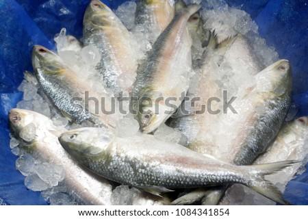 A popular food fish