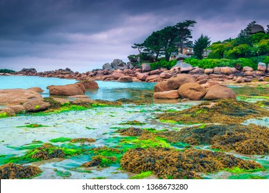 Popular summer travel destination, beautiful rocky beach with pink granite stones and wonderful green gardens on the coast, Ploumanach, Perros-Guirec, Pink Granite Coast, Brittany, France, Europe