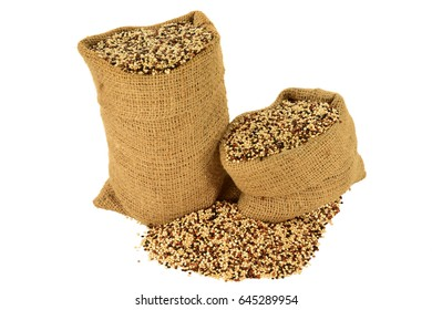 Popular as Tri color (Tri-Color, Tricolor) Organic Quinoa seeds (white, Black, Red Quinoa seeds) in burlap bags and spilled out on pile isolated over white background