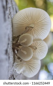 Porcelain fungus on deaed wood in the forest