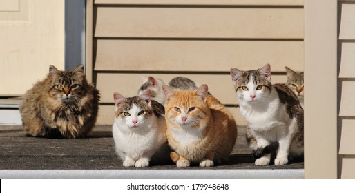 A porch full of pretty cats of various colors and patterns