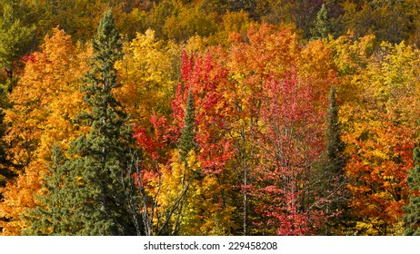Porcupine Mountains Wilderness State Park, Ontonagon, Michigan, USA - September 30, 2011:  Variety of fall colors on trees in Porcupine Mountains Wilderness State Park.