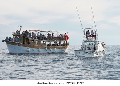POREC, CROATIA - JULY 22, 2018: Tourists on excursion boats off the coast of Porec in Croatia in search of dolphins
