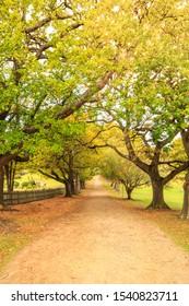 Port Arthur Autumn/Fall trees lining road Tasmania australia
