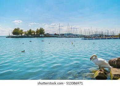 Port of Balatonfured and Lake Balaton with boats and birds in Hungary