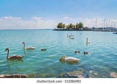 Port of Balatonfured and Lake Balaton with boats and swans in Hungary