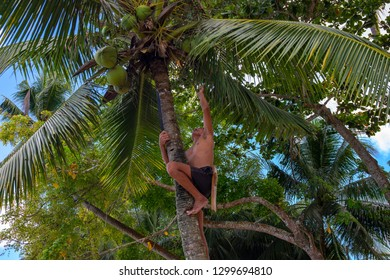 Port Barton, Philippines - 25 Nov 2018: Coco climber picks up coconuts from palm tree. Coco climbing man at work. Dangerous low-paid job in asian country. Asian man with machete on coco palm tree