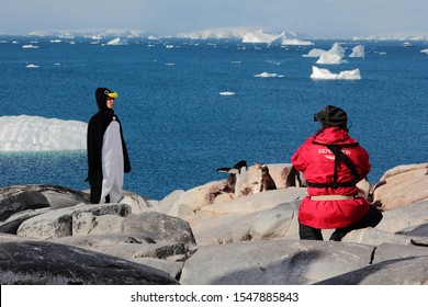 PORT CHARCOT, ANTARCTIC PENINSULA - JAN 31 2017: A Film Crew Takes Photos and Makes a Funny Movie of a Woman Dressed in a Penguin Costume with Penguins, Ocean and Icebergs in the Background