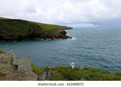 port isaac bay with seagull in foreground