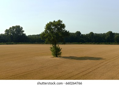 Portiolo (Mn),Italy,a cornfield in the floodplain of the river Po