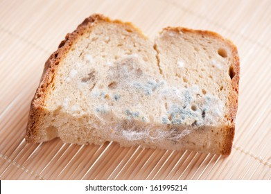 Portion of moldy bread zoom, piece of food with toxic mold or mould with plenty colored spores lying on mat. Nobody, horizontal orientation.