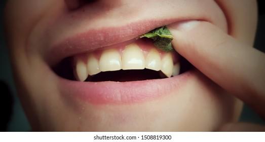 Portion Snus Tabak zum Gebrauch durch Zahnfleisch