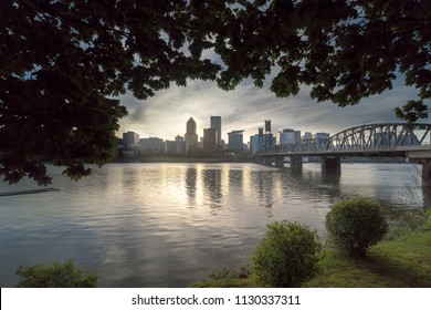 Portland Oregon skyline under the canopy of the trees during sunset