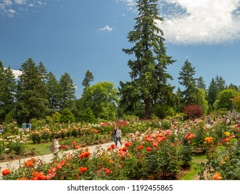 Portland, Oregon, USA - July 2018: International Rose Test Garden in Protland
