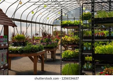 1000 Magic Herbalism Stock Images Photos Vectors Shutterstock
