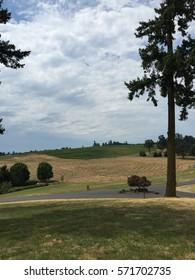 Portland vineyard