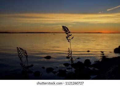 Portlick Forest, Lough Ree, Athlone, Ireland