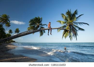 Porto de Pedras, Alagoas / Brazil - 09/12/2015: boy climbing coconut tree on Patacho Beach - north coast of Alagoas - Coral Coast