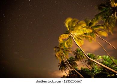 Porto de Pedras, Alagoas / Brazil -  09/14/2018: Coconut trees in Patacho Beach at night - North coast of Alagoas