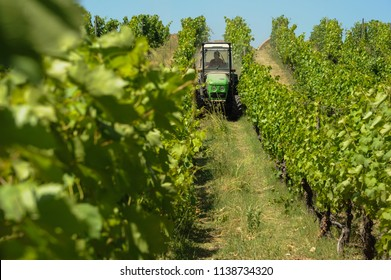 Porto, district of Porto, Portugal, June 12, 2017. Agricultural tractor working the grape plantation in the Douro river valley.