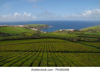 Porto Formoso tea plantation, Sao Miguel, Azores, Portugal