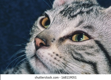 Portrait of a 5 month old gray tabby kitten