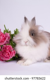 Portrait of adorable bunny with pink flowers on white background
