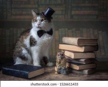Portrait of adorable cat in hat cylinder and glasses
