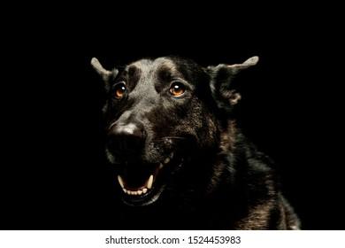 Portrait of an adorable german shepherd looking satisfied