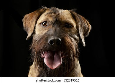Portrait of an adorable mixed breed dog, studio shot, isolated on black.