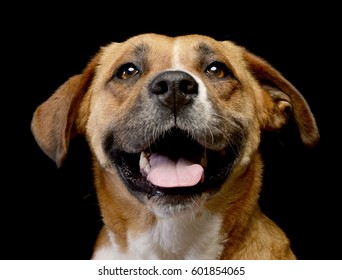 Portrait of an adorable Staffordshire Terrier - studio shot, isolated on black.
