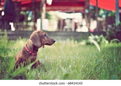 portrait of adorable young dog in the grass