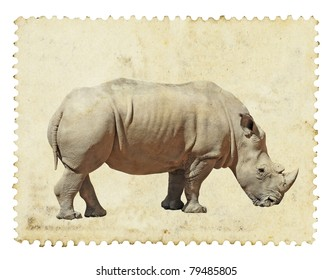 Portrait of an adult African White Rhinoceros on a grungy brown vintage paper. The African White Rhinoceros is scientifically known as Ceratotherium Simum.