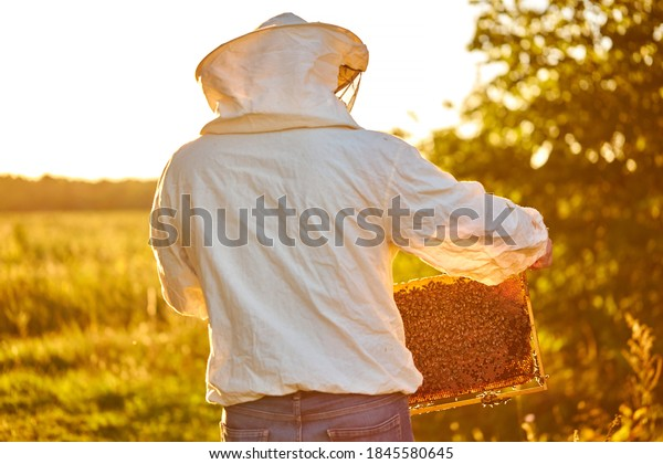 portrait of adult man beekeeper holding a honeycomb full of bees, professional beekeeper in protective workwear inspecting honeycomb frame at apiary. beekeeper harvesting honey