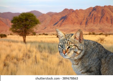 Portrait of an African wild cat (Felis silvestris lybica), South Africa