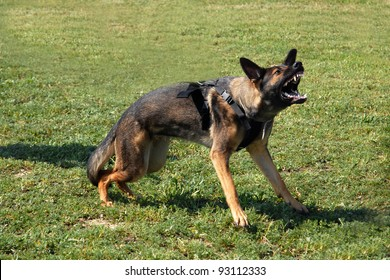 Angry German Shepherd Images, Stock Photos & Vectors
