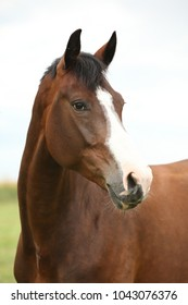 Portrait of amazing brown horse without bridle