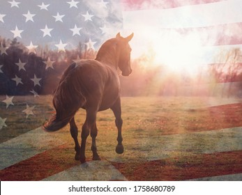 Portrait of an American Quarter horse in summer sunlight with USA flag on the background