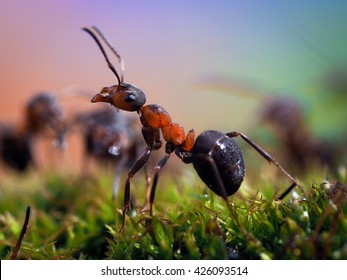 Portrait of an ant. Macro. Ant red forest. Moss green