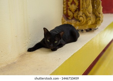 Portrait Asian black cat sleep