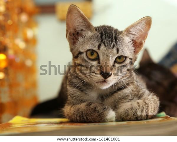 portrait of baby cat