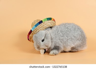 portrait of baby and cute gray easter bunny rabbit with beautiful hat on orange background