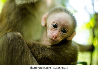 Portrait of baby Monkey