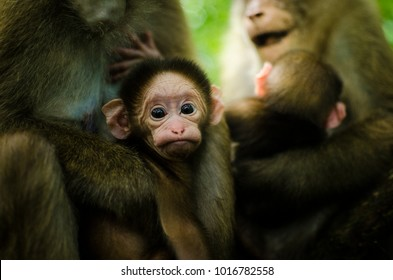 baby monkey images, stock photos & vectors | shutterstock