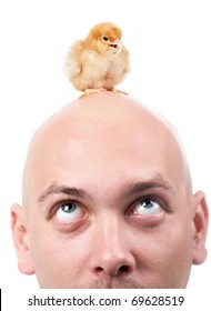 Portrait of bald man looking at chick placed on his head