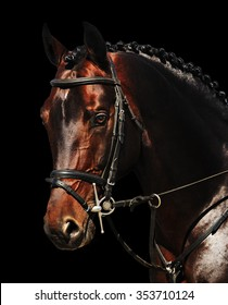 Portrait of bay horse isolated on black