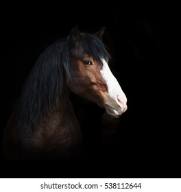 Portrait of bay horse  isolated on black background